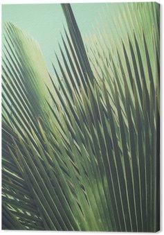 Tableau sur Toile Abstract vintage background tropical. Feuilles de palmier dans la lumière du soleil.