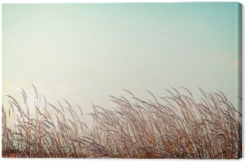 Tableau sur Toile Abstraite nature vintage background - douceur herbe plume blanche avec rétro espace de ciel bleu