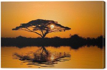 Tableau sur Toile Arbre d'acacia au lever du soleil