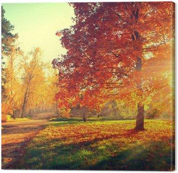 Tableau sur Toile Arbres baignés dans la lumière du soleil d'automne