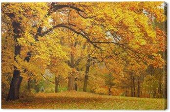 Tableau sur Toile Automne / Gold arbres dans un parc