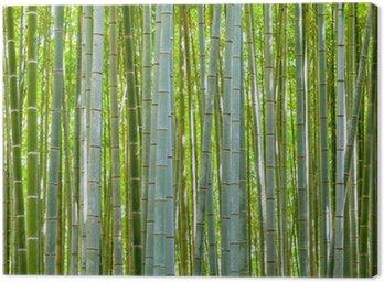 Tableau sur Toile Bambou fond dans la nature au jour