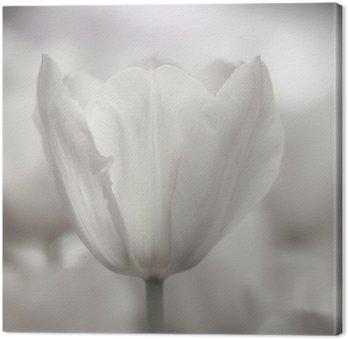 Tableau sur Toile Beaux-Arts de close-up Tulipes, floue et nette