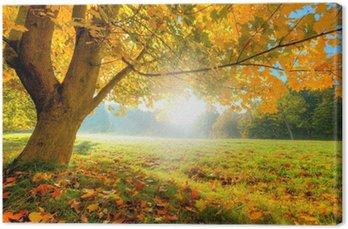 Tableau sur Toile Bel arbre d'automne avec des feuilles sèches tombées