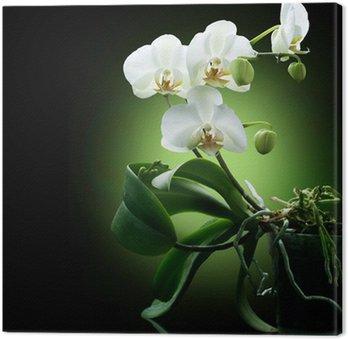 Tableau sur Toile Belle orchidée blanche isolé sur noir