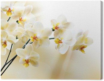 Tableau sur Toile Belle orchidée blanche