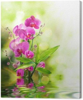 Tableau sur Toile Belle orchidée et le bambou pour le traitement de la frontière spa sur l'eau