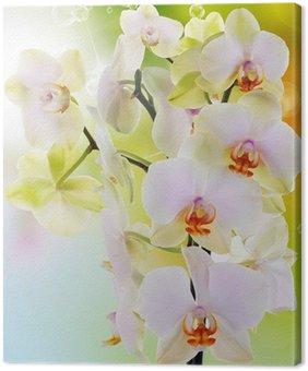 Tableau sur Toile Belles fleurs Orchid.Beauty.Flora japonais