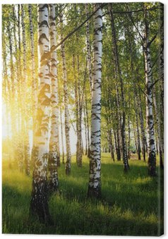 Tableau sur Toile Bouleaux dans une forêt de l'été