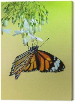 Tableau sur Toile Butterfly alimentation sur le pollen