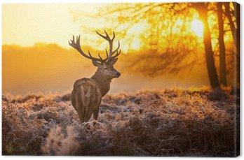 Tableau sur Toile Cerf dans le soleil du matin