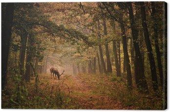 Tableau sur Toile Cerfs dans une forêt