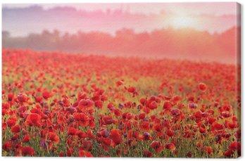 Tableau sur Toile Champ de coquelicot rouge dans la brume matinale
