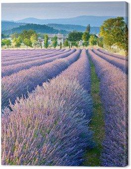Tableau sur Toile Champ de lavande en Provence