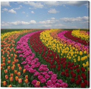 Tableau sur Toile Champs de tulipes colorées Néerlandais en journée ensoleillée