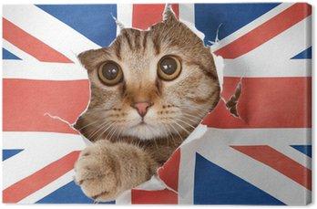 Tableau sur Toile Chat britannique regardant par le trou dans le papier drapeau Grande-Bretagne