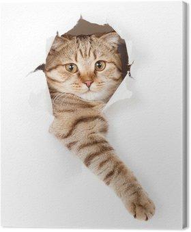 Tableau sur Toile Chat dans le trou de papier peint