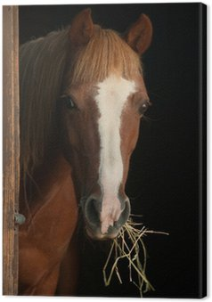 Tableau sur Toile Châtaignier poney regardant l'écurie