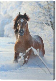Tableau sur Toile Cheval bai courir en hiver