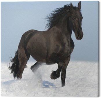 Tableau sur Toile Cheval noir frison sur la prairie