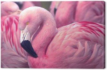 Tableau sur Toile Chilienne Pink Flamingo