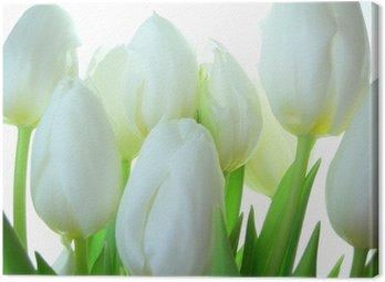 Tableau sur Toile Close-up de bouquet de tulipes blanches sur fond blanc