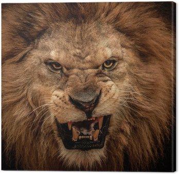 Tableau sur Toile Close-up shot de lion rugissant