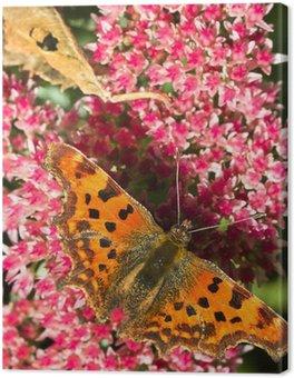 Tableau sur Toile Comma papillon alimentation sur les fleurs de sedum