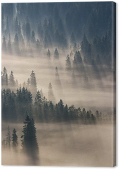 Tableau sur Toile coniferous forest in foggy mountains