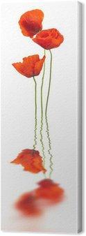 Tableau sur Toile Coquelicots et de réflexion sur blanc - rouge coquelicot, le design floral