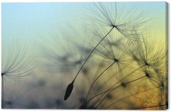 Tableau sur Toile Coucher de soleil doré et le pissenlit, fond zen méditative