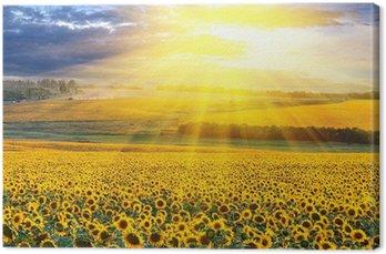 Tableau sur Toile Coucher de soleil sur le champ
