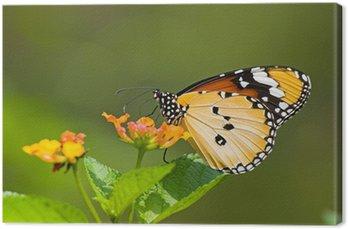 Tableau sur Toile Danaidae (Anosia chrysippus, Danaidae) sur les flux d'alimentation