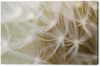 Tableau sur Toile Dandelion close-up