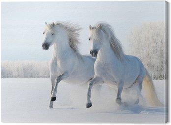 Tableau sur Toile Deux chevaux blancs galopant dans la neige