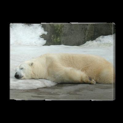 tableau sur toile dormir ours polaire pixers nous. Black Bedroom Furniture Sets. Home Design Ideas