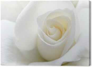Tableau sur Toile Douce rose blanche