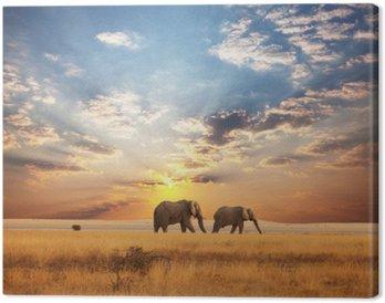 Tableau sur Toile Éléphant