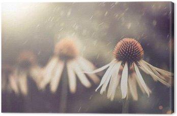 Tableau sur Toile Fleur d'été sous la pluie