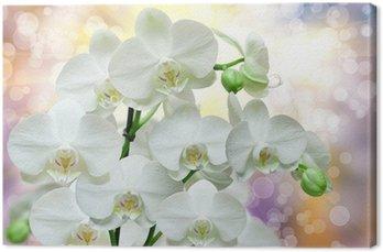 Tableau sur Toile Fleur d orchidee