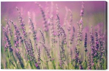 Tableau sur Toile Fleur de lavande