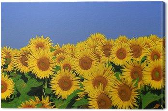 Tableau sur Toile Fleurs d'été