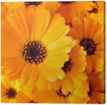 Tableau sur Toile Fleurs de Calendula