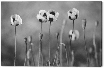 Tableau sur Toile Fleurs de pavot noir et blanc