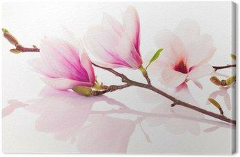 Tableau sur Toile Fleurs roses de printemps avec la réflexion