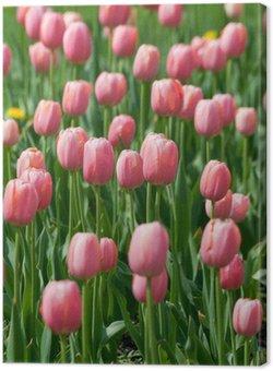 Tableau sur Toile Floraison des tulipes roses