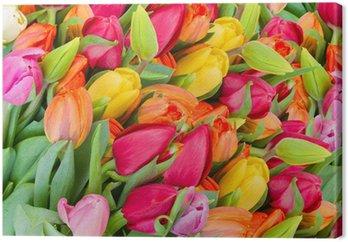 Tableau sur Toile Fond de tulipes au printemps