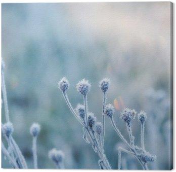 Tableau sur Toile Fond naturel abstrait de la plante gelée recouverte de givre ou de givre