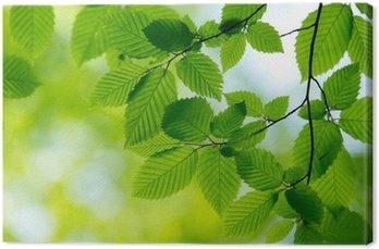 Tableau sur Toile Fond vert naturel