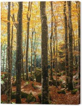 Tableau sur Toile Forêt de hêtres en automne